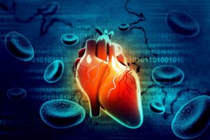cardiologie_systeme_sanguin